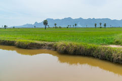 Rice fields at  National Park Prachuap Khiri Khan Province Stock Images