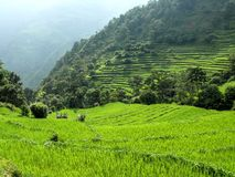 Rice fields near Bahundanda - Annapurna circuit - Nepal Royalty Free Stock Photos