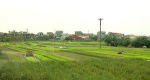 Rice fields near Hanoi - Stock Photo