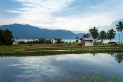 Rice fields near Lake Maninjau (Danau Maninjau) Royalty Free Stock Photography