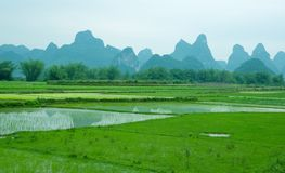 Rice fields near Yangshuo Royalty Free Stock Photo