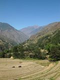 Rice fields in Nepal. Harvest time. Stock Image