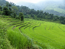 Rice fields, Nepal Stock Photography