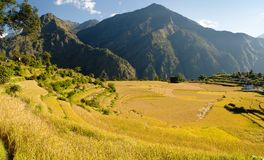 Rice fields in Nepal Stock Photos
