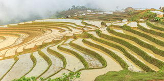 Rice fields in north Vietnam Stock Images