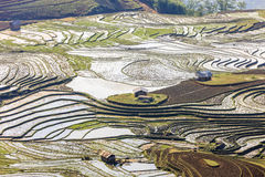 Rice fields in north Vietnam Stock Photography