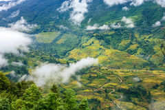 Rice fields at north Vietnam Stock Photography
