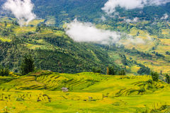 Rice fields at north Vietnam Royalty Free Stock Photography