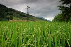 Rice fields in northern China, stunning backdrops d.y. Amazing fields of rice in northern China, stunning backdrops d.y Stock Photography
