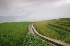Rice fields in northern China, stunning backdrops d.y. Amazing fields of rice in northern China, stunning backdrops d.y Royalty Free Stock Photos