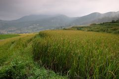 Rice fields in northern China, stunning backdrops d.y. Amazing fields of rice in northern China, stunning backdrops d.y Stock Image