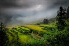 Rice fields in northern China, stunning backdrops d.y. Amazing fields of rice in northern China, stunning backdrops d.y Royalty Free Stock Photography