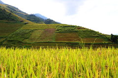 Rice fields in Northern of Vietnam Stock Photo