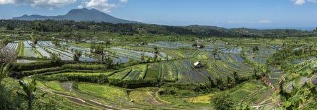 Rice fields panorama and volcano