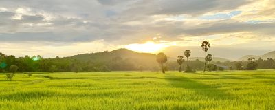 Rice fields and peasant lifestyle. (photos&#x29 royalty free stock photos