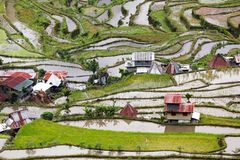 Rice fields in Philippines Stock Photo