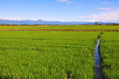 Rice fields of Piedmont Royalty Free Stock Photos