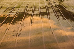 Rice fields before planting. In sun set Royalty Free Stock Photos