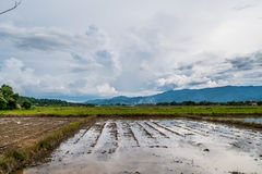 Rice fields prepared for growing rice. The simple way of life of Thai peasants with mountain background under blue sky with cloud. At Chiang Dao, Chiang Mai Royalty Free Stock Photo