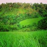 Rice fields. Seen from Campuhan Ridge Walk, near Ubud, Bali stock image