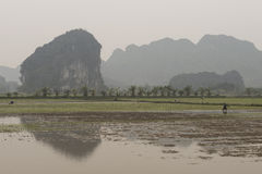 Rice fields and river. Nimh Binh, Vietnam. Winter rice fields surrounded by karst mountains and rivers. Nimh Binh, Vietnam royalty free stock photo