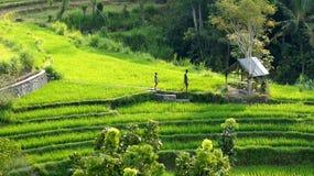 Bali landscape Stock Photos