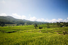 Rice fields in rural valley Stock Photo