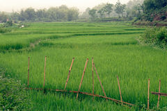 Rice fields in Sa Pa valley royalty free stock photo