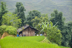 The rice fields of Sa Pa in Vietnam Royalty Free Stock Image