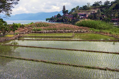 Rice Fields, Samosir royalty free stock images