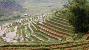 Rice fields in Sapa Valley in Vietnam. Scenic view of rice field and terraces in Sapa Valley, Vietnam royalty free stock images