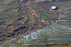 rice fields Sapa Vietnam Stock Photos