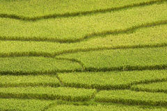 Rice fields in sapa in vietnam Stock Photo