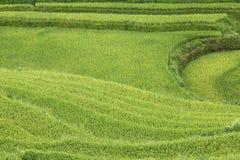 Rice fields in Sapa, Vietnam. Royalty Free Stock Image