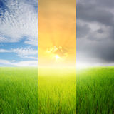 Rice fields and sky all season,Set Collection Royalty Free Stock Photos