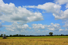 Rice fields sky. And The tree Royalty Free Stock Photos