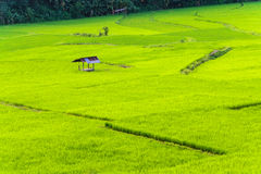 Rice fields with small cottage on the hill Stock Photography