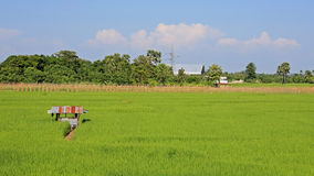 Rice fields and small farmer cabin Stock Photo