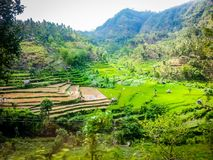 Rice Fields of South East Asia royalty free stock photos