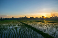 Rice fields and sunset Stock Photos