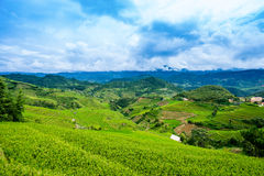 Rice fields on terrace in rainy season at La Pan Tan, Mu Cang Chai royalty free stock images