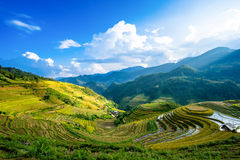 Rice fields on terrace in rainy season at La Pan Tan, Mu Cang Chai Royalty Free Stock Photo