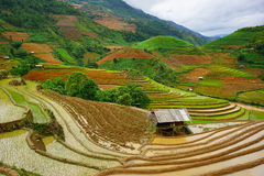 Rice fields on terrace in rainy season at Mu Cang Chai, Yen Bai, Vietnam. Stock Photos