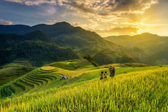Rice fields on terrace stock photos