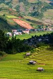 Rice fields on terrace in rainy season at Mu Cang Chai, Yen Bai, Vietnam. Rice fields prepare for transplant at Northwest. royalty free stock images