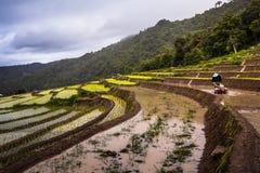 Rice fields on terraced. Stock Photos