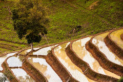 Rice fields on terraced. Stock Images