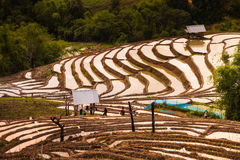 Rice fields on terraced. Stock Photography
