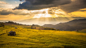 Rice fields on terraced. The Rice fields on terraced stock photography