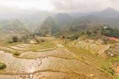 Rice fields on terraced of  Cat Cat Village,Vietnam. Royalty Free Stock Photos